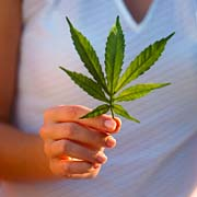 Kokį poveikį žmogaus organizmui daro marihuana?