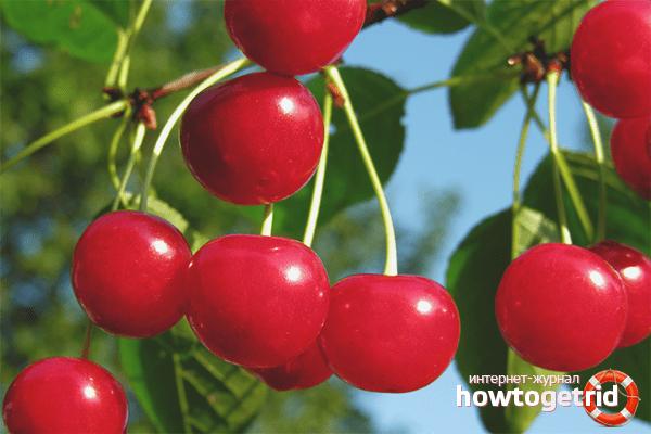 yra vyšnios, vartojančios hipertenziją myasthenia gravis arba hipertenzija