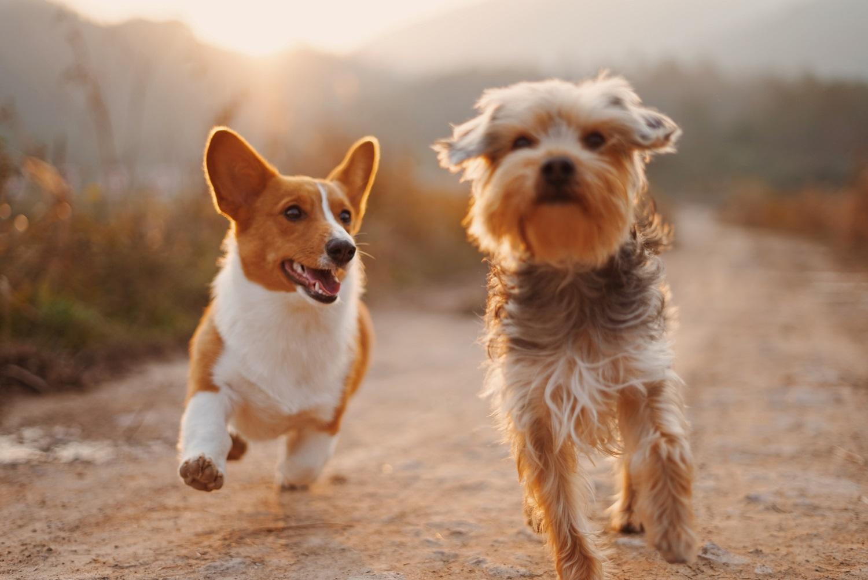 hipertenzija šuns simptomuose)