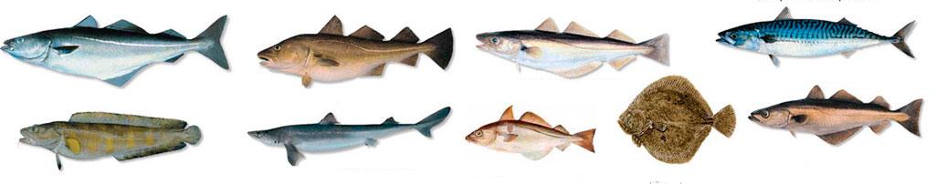 žuvis naudinga esant hipertenzijai)