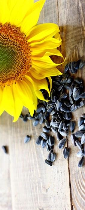hipertenzijos gydymas saulėgrąžų sėklomis vaistai hipertenzijos farmakologijai gydyti