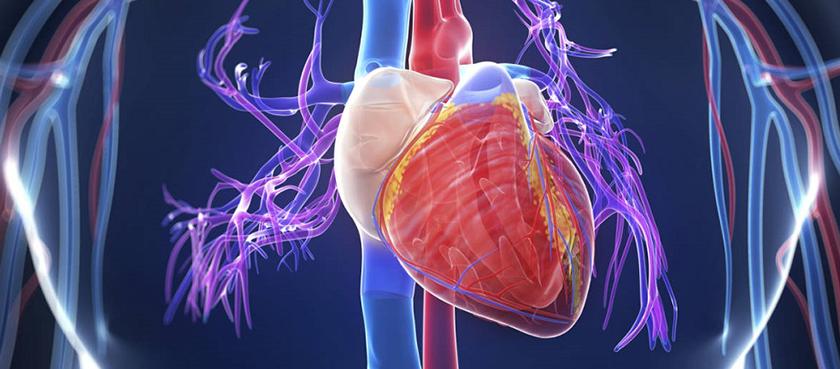 Širdies ir kraujagyslių sistemos ligos.