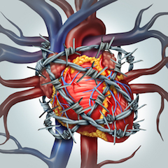 širdies perkusija su hipertenzija)