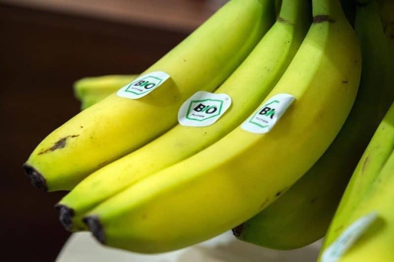 bananų valgymo nauda sveikatai