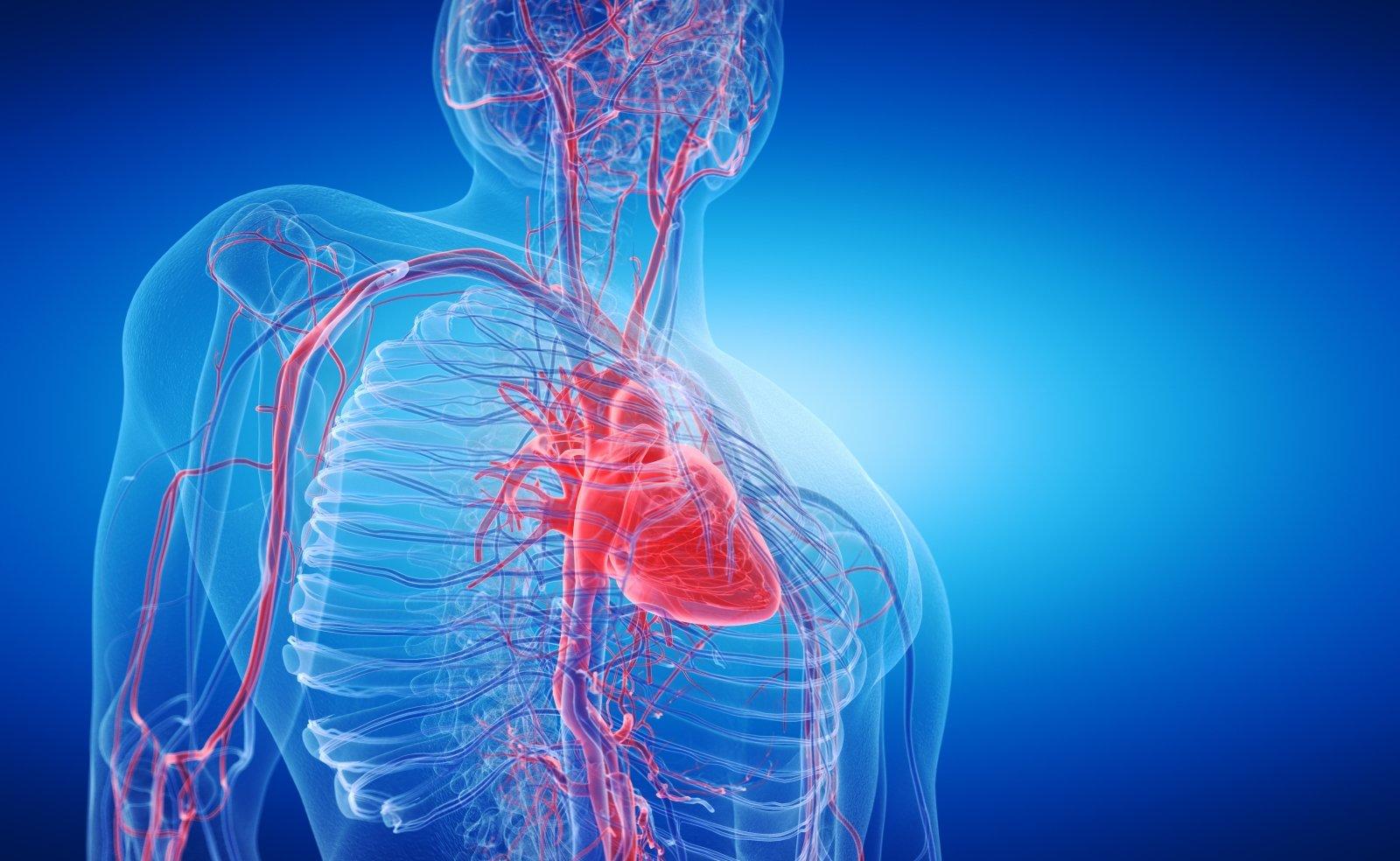 kaip treniruoti hipertenzija sergančią širdį ir kraujagysles hipertenzijos kraujagyslės išsiplečia arba susiaurėja