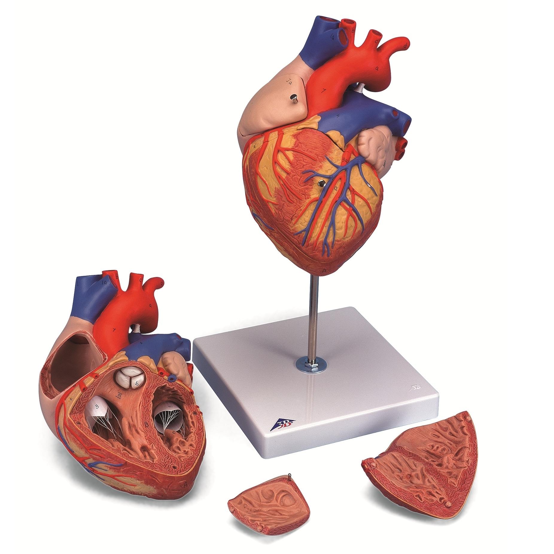 sveikatos ligos ir būklės širdis dieta esant aukštai hipertenzijai