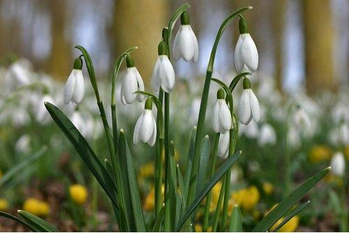 pavasario hipertenzija