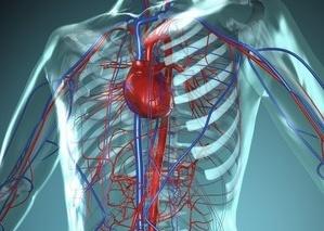 kaip treniruoti hipertenzija sergančią širdį ir kraujagysles hipertenzijos rekomendacija