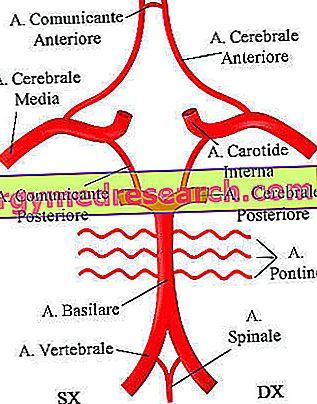 Kaip gydyti stuburo arterijos tortuosity - Hipertenzija November