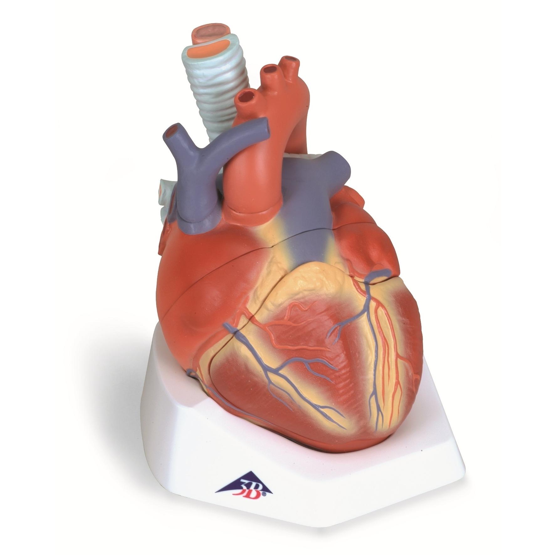 interaktyvios širdies sveikatos priemonės