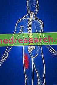 nervų sistemos įtaka hipertenzijai