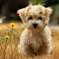 Šunų širdies ligos | Jakovo veterinarijos centras