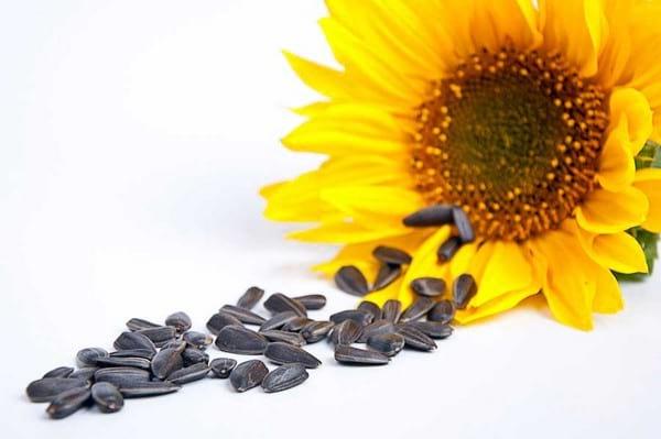 Kova su hipertenzija su saulėgrąžų sėklomis