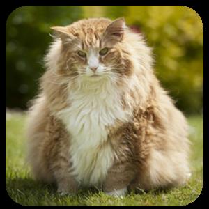 katė gydoma hipertenzija)