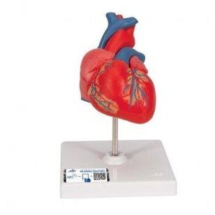 magnio tirpalas sergant hipertenzija ar galima būti hipertenzijos donoru