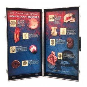Gyvūnų širdies ligos: kaip atpažinti simptomus ir kurių veislių atstovai serga dažniausiai?
