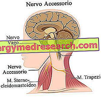 Vagotonija - nervų sistemos liga