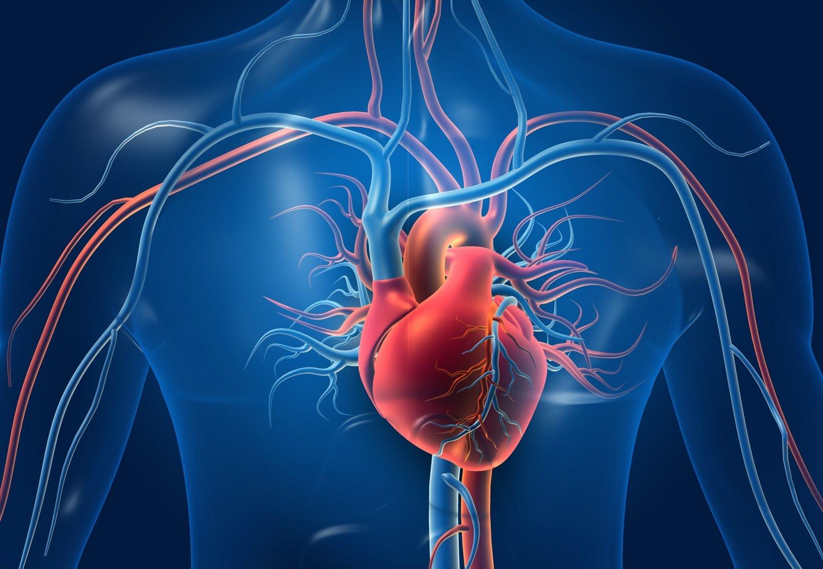 kaip turėti gerą širdies sveikatą)