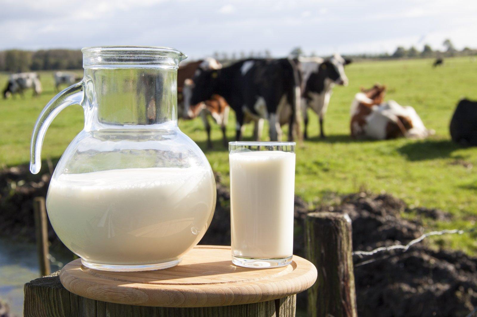 Vartojate pieną ir jo produktus? Mokslų daktarė įvardijo, kuo rizikuojate - DELFI Maistas