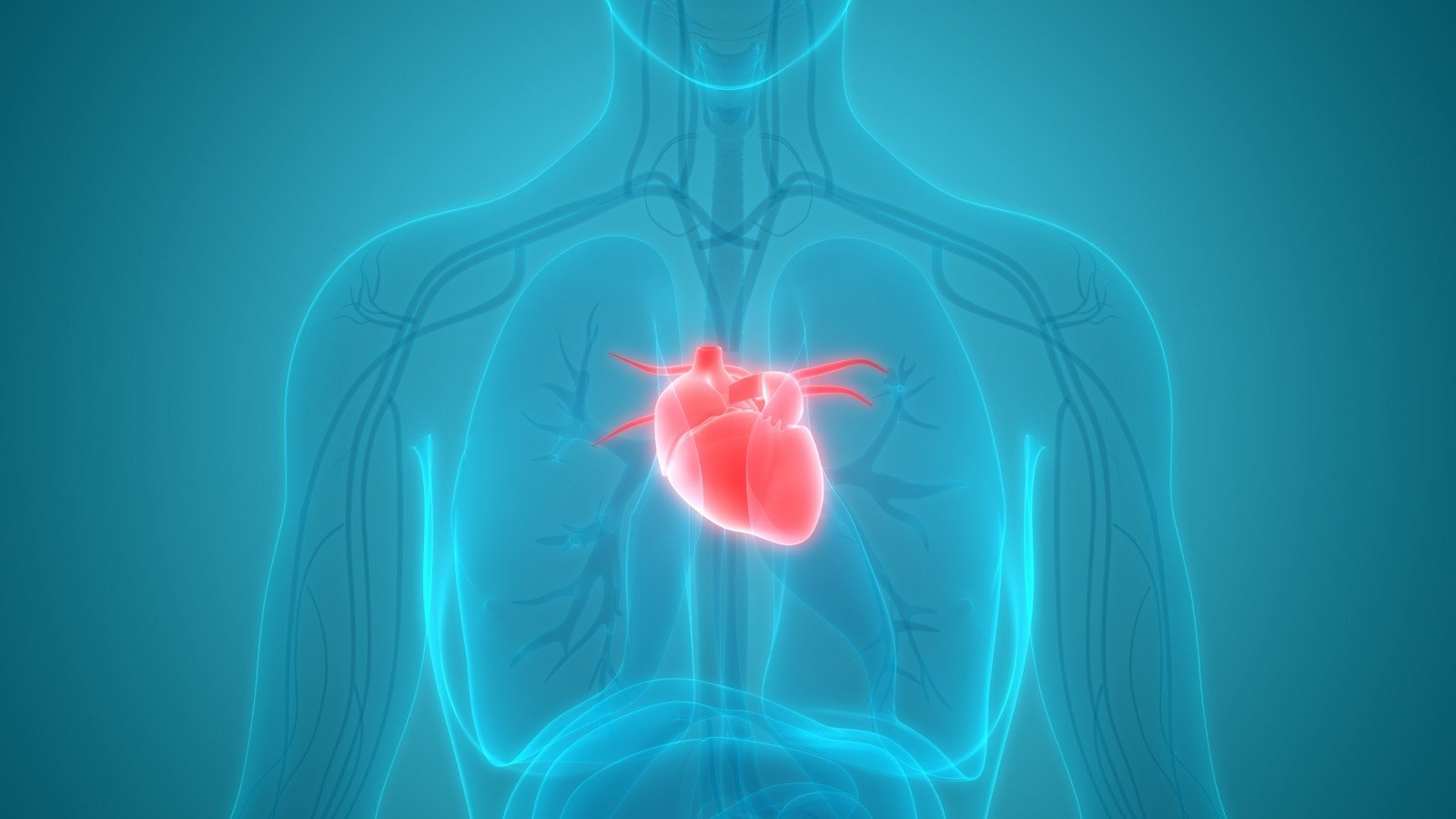 7 paprasti žingsniai į širdies sveikatą ką jūs galite padaryti sporto salėje su hipertenzija