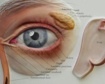 paraudusios akys ir hipertenzija