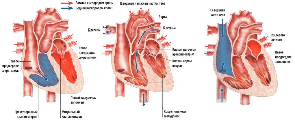 esant žemam širdies slėgio hipertenzijai