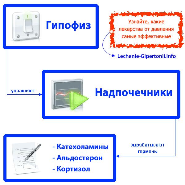 hipertenzija ir hormonai)