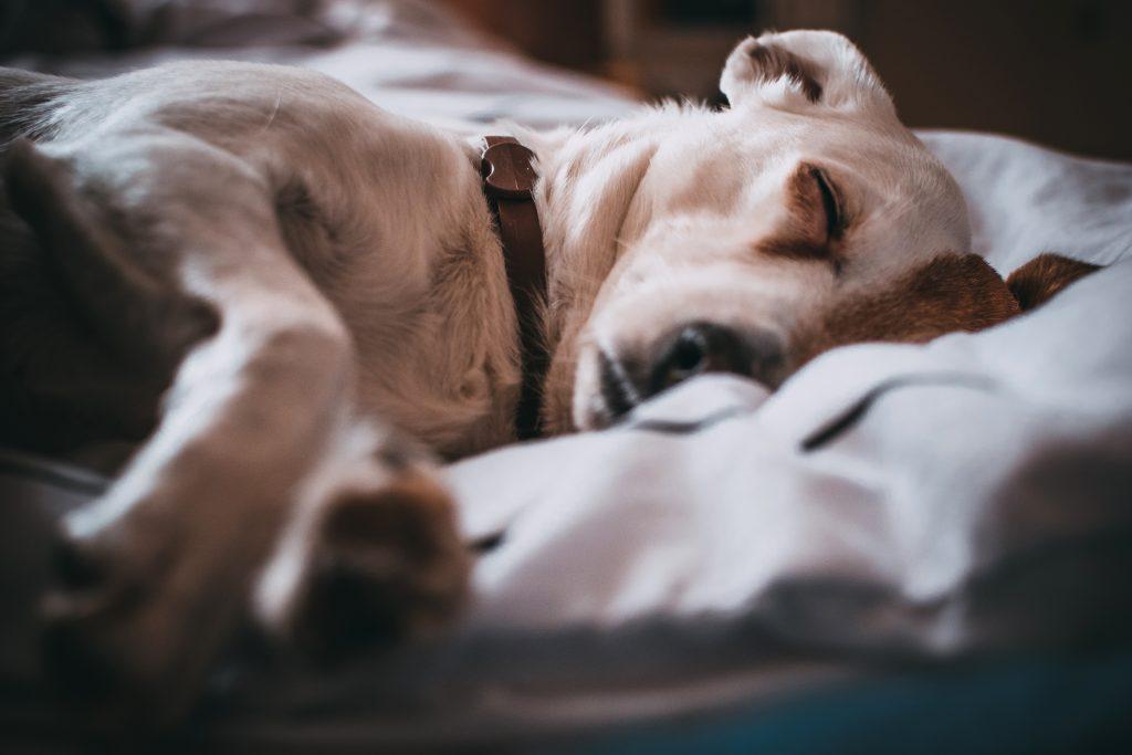 šuo serga hipertenzija
