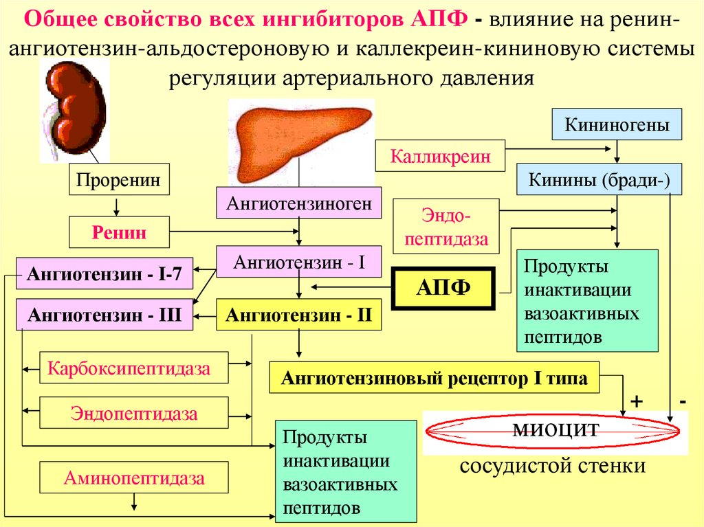 APF inhibitorius nuo hipertenzijos)