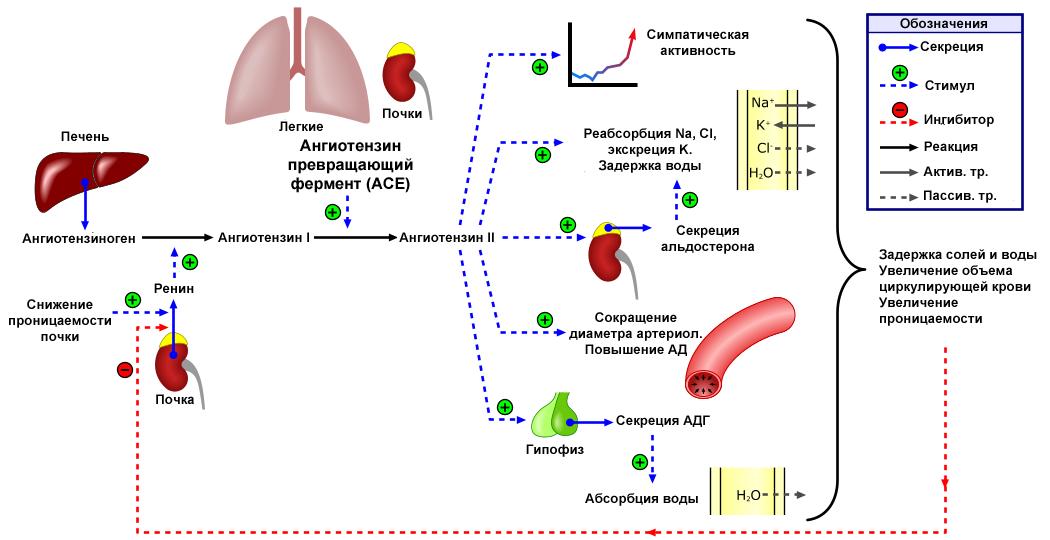 hipertenzija 3 laipsniai 2 etapai)