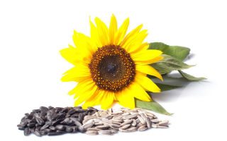 10 naudingiausių sveikatai sėklų