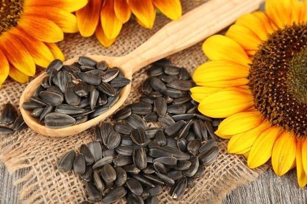 hipertenzijos gydymas saulėgrąžų sėklomis