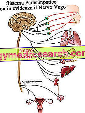 makšties nervas ir hipertenzija)