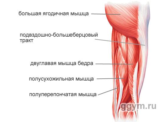 raumenų hipertenzijos forma)