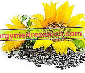 saulėgrąžų hipertenzija