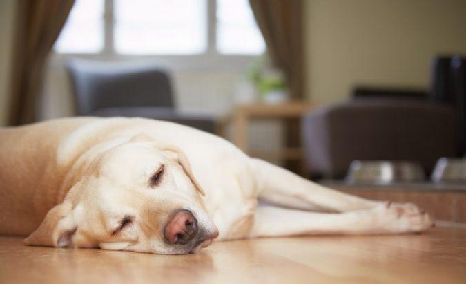 šuo serga hipertenzija)